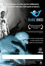lucinda-rare-bird