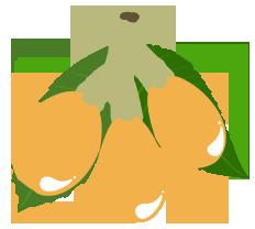Loquat for websie